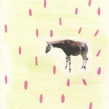 La felicidad del okapi - Viaje ante el espejo